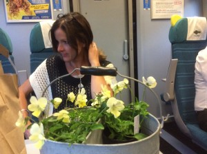 On the train home from GROW show with my gorgeous perennial violas and a new galvanised metal trough for collecting cut flowers - the perfect summer gardening accessory..