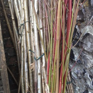 Hazel and Dogwood stems